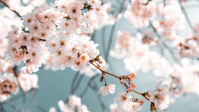 日本人講師のレッスンが受けられるオンライン英会話おすすめ3選【初心者向け】のまとめ